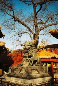 Eine steinerne Löwenstatue vor einem chinesischen Tempel.